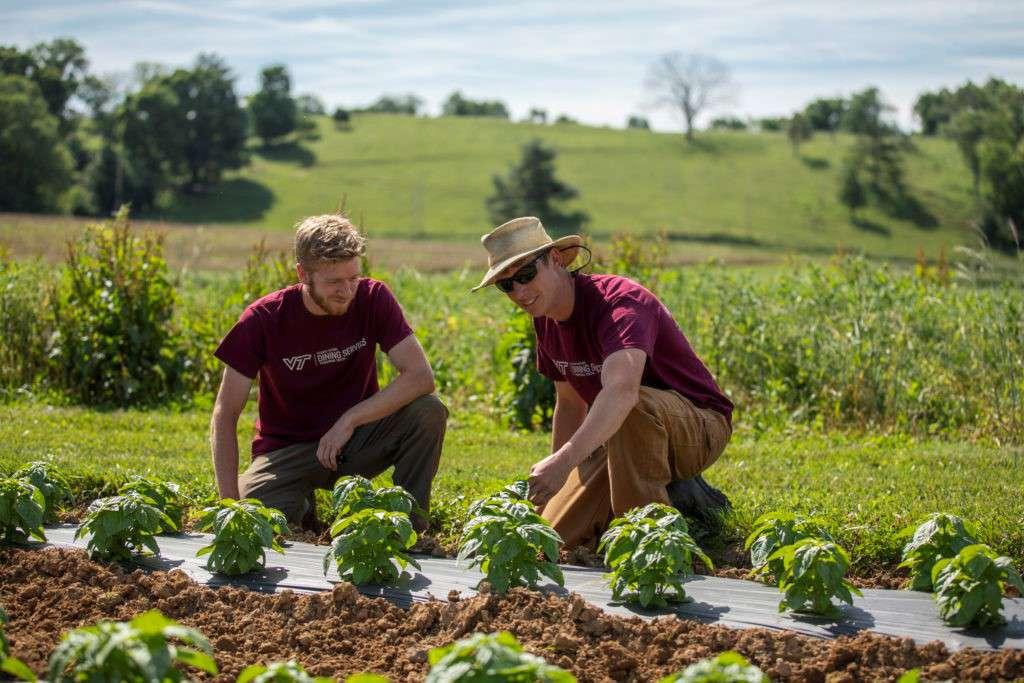 طرح مزرعه داران جوان در کانادا